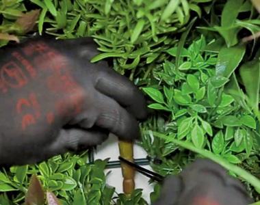 インシュロックは、中心の太い茎に1本、左右の茎に1本ずつ、合計3本使用します。