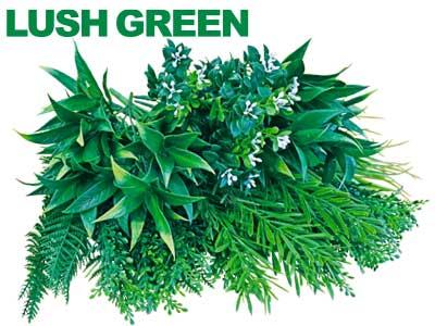 カラーボックスラッシュグリーン